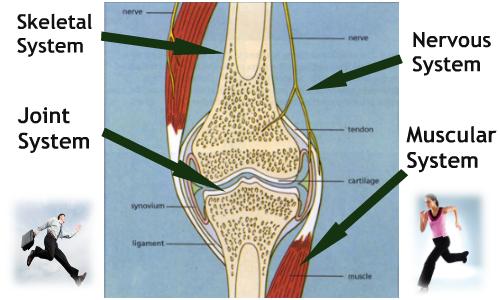 Arthritis Back Pain Knee Pain Eczema Business