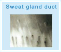 MicroCirculation Microscope Test