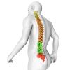Arthritie Knee Pain Back Pain Cervical Spondylosis